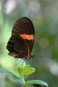 14s_Butterfly_Caracas_Venezuela.jpg -