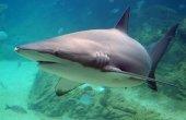 16s_Shark_QLD.jpg -