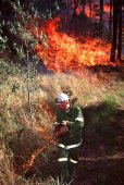 3s_Lantana_burn_off_QLD.jpg -