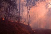 4s_Lantana_burn_off_QLD.jpg -
