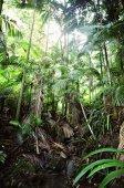 7s_Rain_Forest_QLD.jpg -